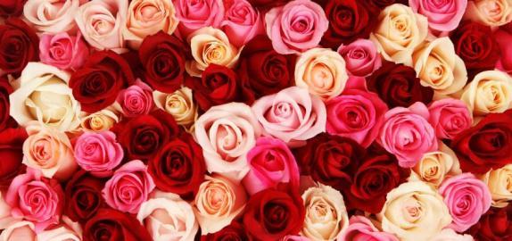 850_400_umbanda-veja-o-significado-das-cores-das-rosas-nos-rituais_1493307847
