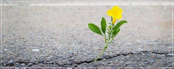 flor-asfalto-post